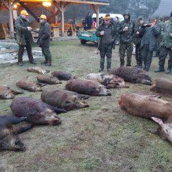 polowanie na dziki w polsce