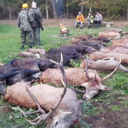 polowania na jelenie