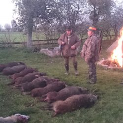 polowanie w polsce
