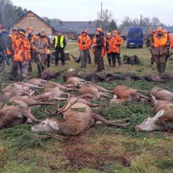 polowania w polsce